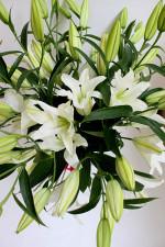 Лилия. Символика цветка.