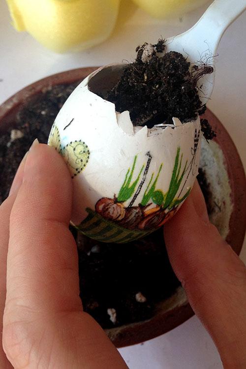 Насыпаем в яйцо землю.