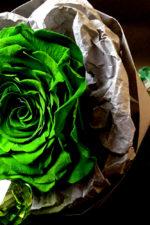 Что такое стабилизированная роза?