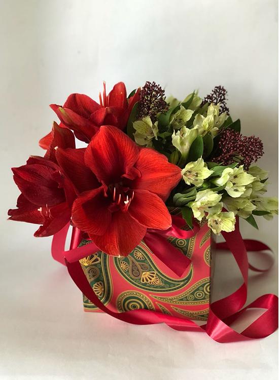Красный амариллис в подарочной коробке