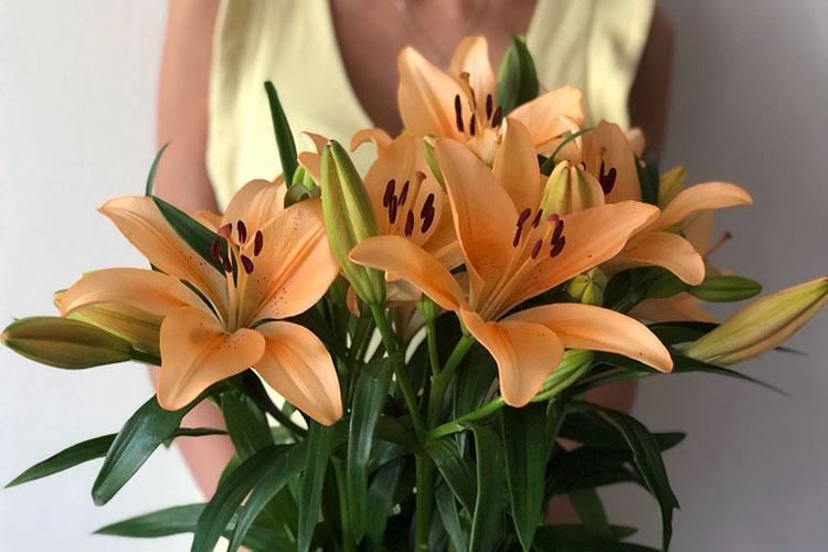 Лилия азиатка оранжевая