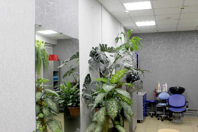 Обновленный зал парикмахерской салона Коктейль