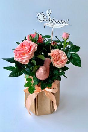 Кустовая роза в горшке в подарок