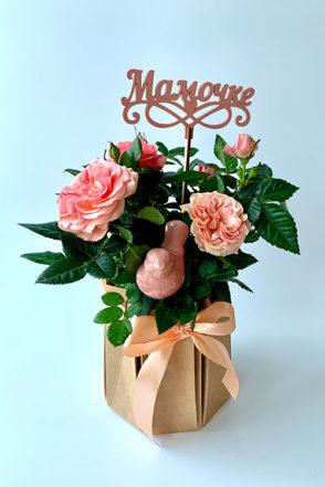 Роза кустовая Кардана в горшке