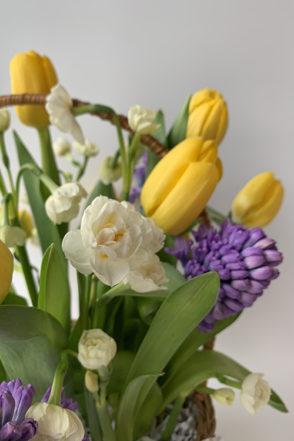 Тюльпаны, гиацинты и нарциссы в корзине