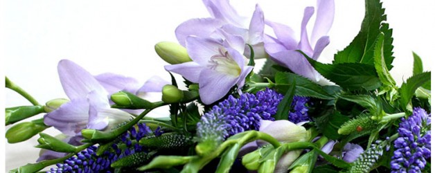 Фрезии — цветы невест!