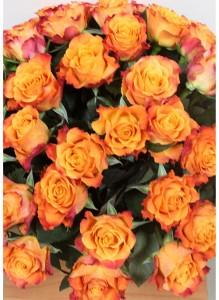 Букет из 50 оранжевых роз.