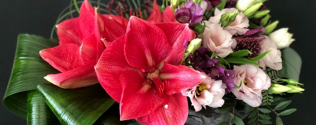 Амариллис — цветок любви.