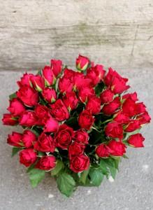 Букет из 51 темно-красной розы.