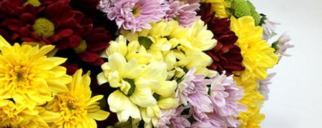 Букет из 25 хризантем.
